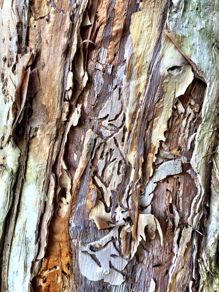 Bark art 4