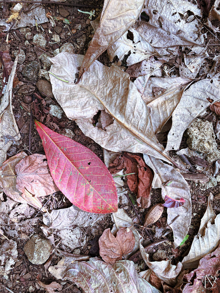 Jungle floor leaves